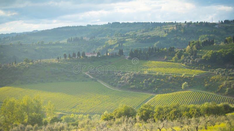C?tes Paysage de la Toscane : collines, fermes, oliviers, cypr?s, vignobles Les collines du chianti au sud de Florence images stock
