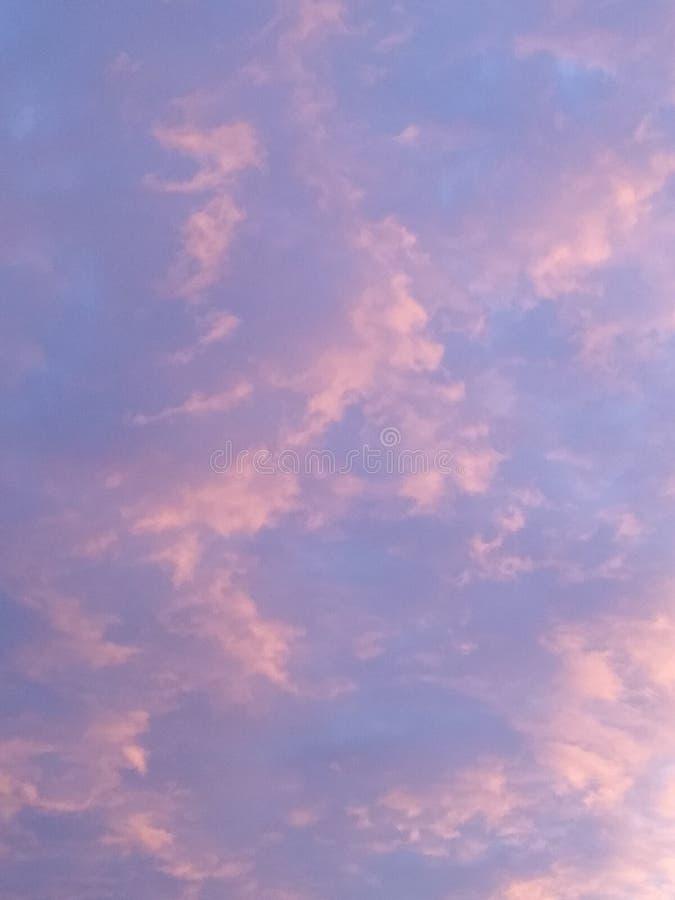 C?u cor-de-rosa fotografia de stock royalty free