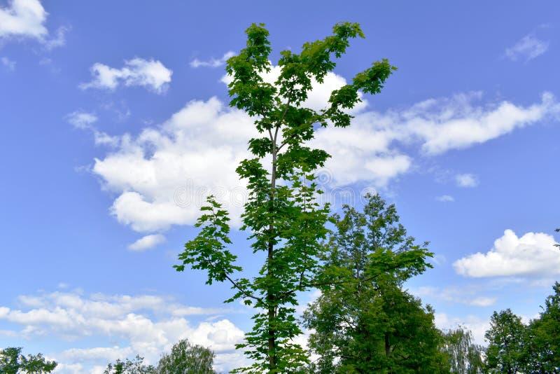 C?u maravilhoso com nuvens foto de stock royalty free