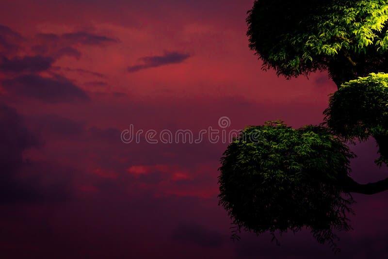 C?u roxo bonito e nuvens escuras com o arbusto aparado na noite ?rvore verde e fundo roxo do c?u fotografia de stock royalty free