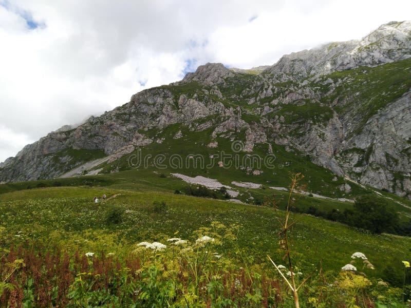 C?u verde do prado e das montanhas fotos de stock