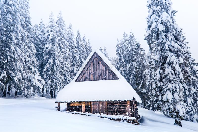 33c ural χειμώνας θερμοκρασίας της Ρωσίας τοπίων Ιανουαρίου δασικός χειμώνας ήλιων φύσης Δέντρα και παλαιό σπίτι που καλύπτονται  στοκ φωτογραφίες με δικαίωμα ελεύθερης χρήσης