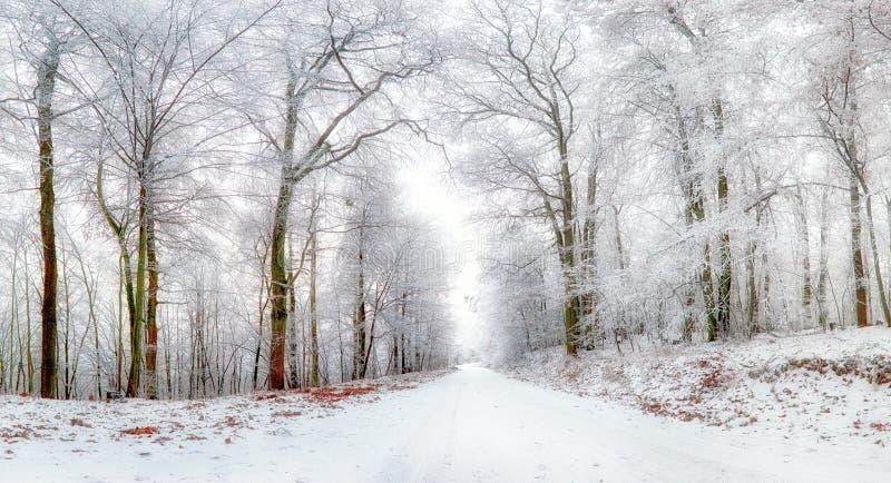 33c ural χειμώνας θερμοκρασίας της Ρωσίας τοπίων Ιανουαρίου Δρόμος και δέντρα που καλύπτονται χειμερινοί με το χιόνι στοκ εικόνα με δικαίωμα ελεύθερης χρήσης