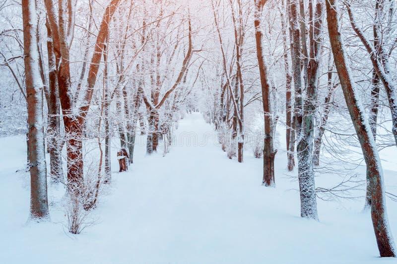 33c ural χειμώνας θερμοκρασίας της Ρωσίας τοπίων Ιανουαρίου Χιονώδη δέντρα κατά μήκος της αλέας χειμερινών πάρκων Χειμερινή χιονώ στοκ φωτογραφίες