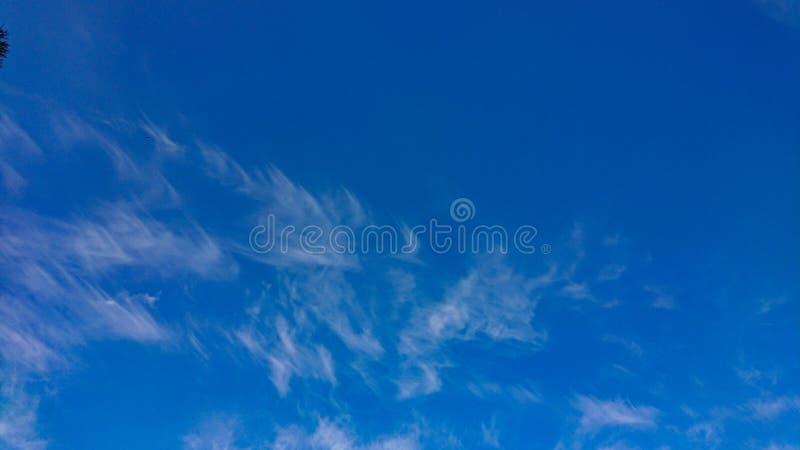 C?us azuis do ver?o fotos de stock royalty free