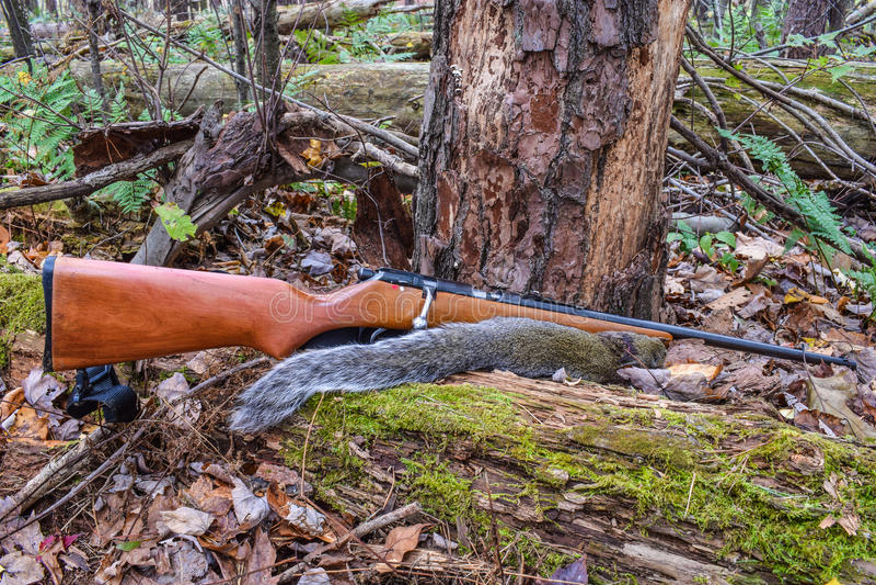 Caça do esquilo imagens de stock