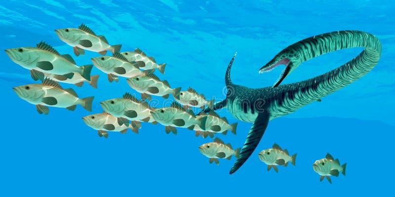 Caça do oceano do Elasmosaurus ilustração do vetor
