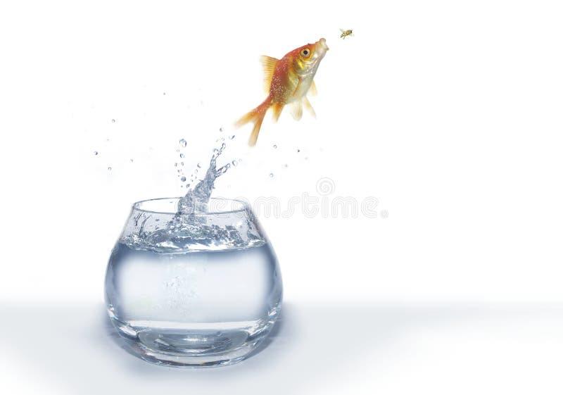 Caça do ouro em peixes da mosca imagens de stock royalty free