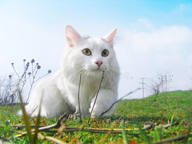 Caçador do gato imagem de stock