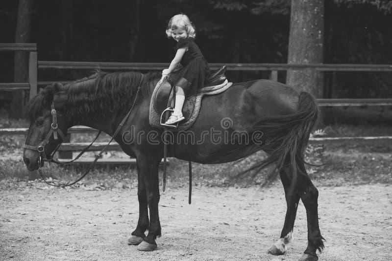 Caçoa a escola do cavalo Amigo, companheiro, amizade foto de stock