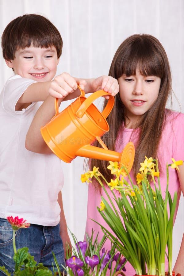 Caçoa flores molhando fotografia de stock royalty free