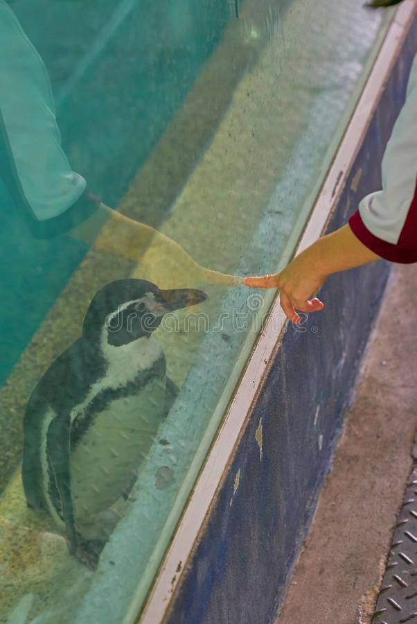 Caçoe o dedo da mamã do ponto da mão ao vidro onde suporte do pinguim para dentro fotografia de stock