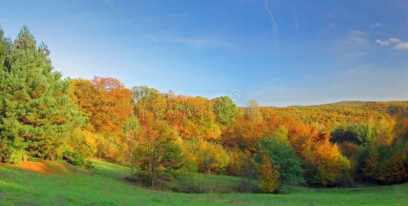 Download Caída imagen de archivo. Imagen de caída, otoño, árboles - 192023