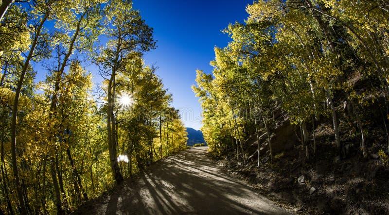 Caída Aspen Trees en el camino de la montaña imagen de archivo libre de regalías