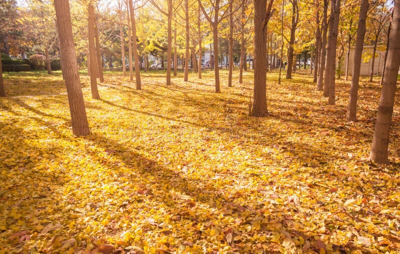 Caída Autumn Landscape foto de archivo