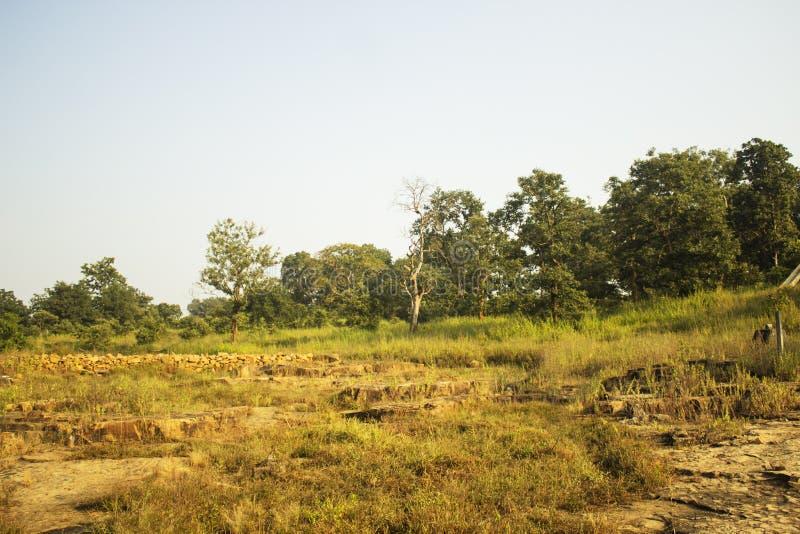 Caída de Kendai un punto de la comida campestre en el korba, chhattisgarh, la India imagenes de archivo