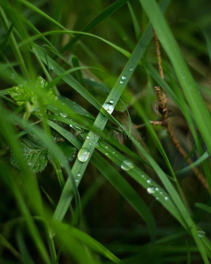 Caída de la lluvia en una cuchilla de la hierba imagen de archivo libre de regalías