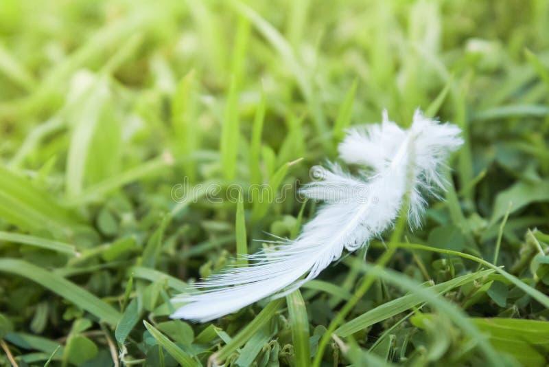 Caída de la pluma blanca en campo de hierba verde foto de archivo libre de regalías