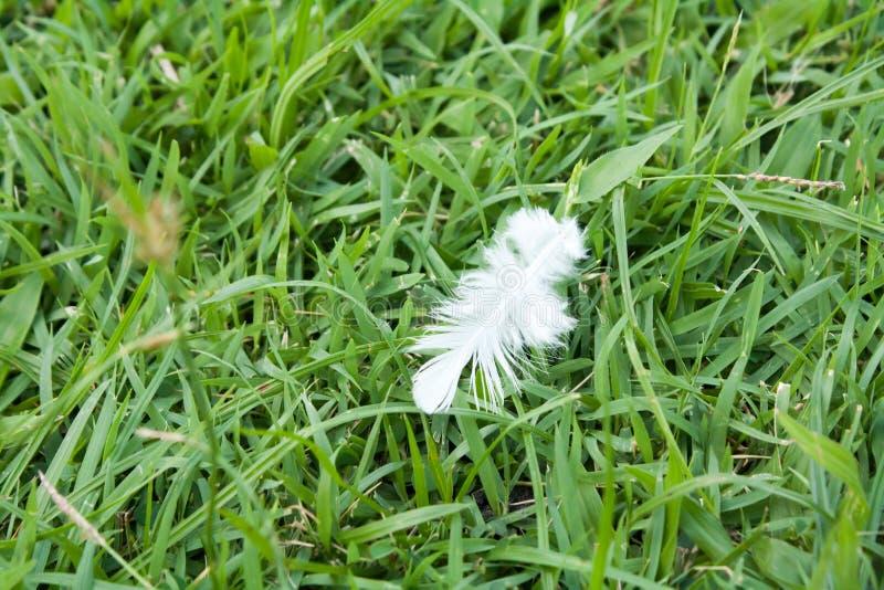 Caída de la pluma blanca en campo de hierba verde fotografía de archivo