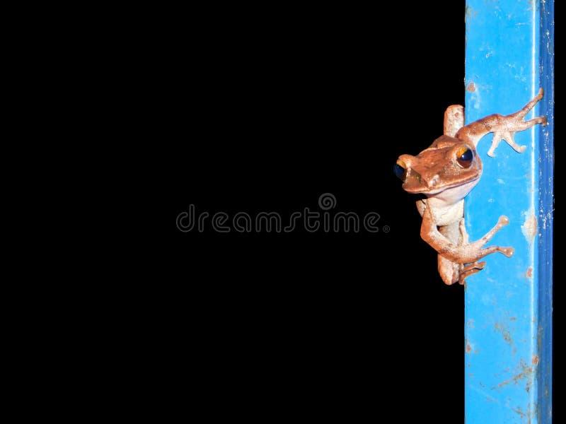 caída de la rana verde en la caja de pilar del metal foto de archivo libre de regalías