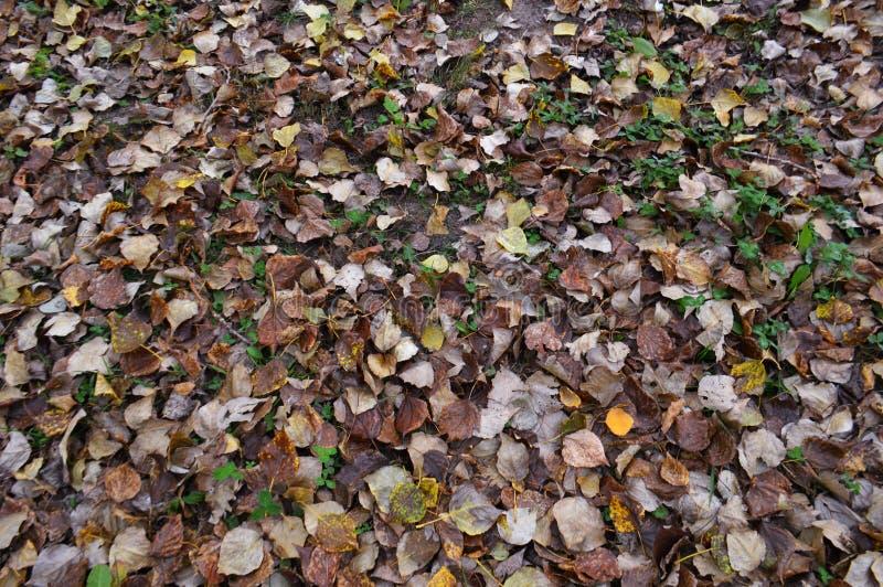 Caída de las hojas de otoño a la tierra foto de archivo