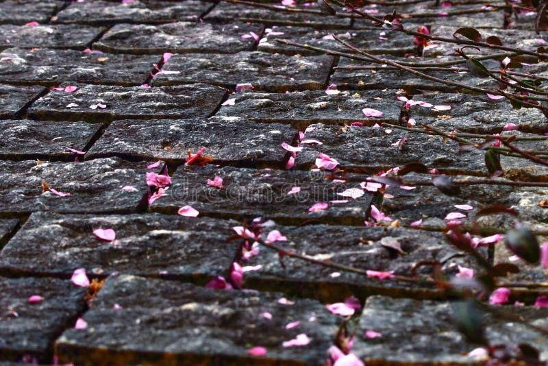 Caída de los flores del melocotón a la tierra imagen de archivo