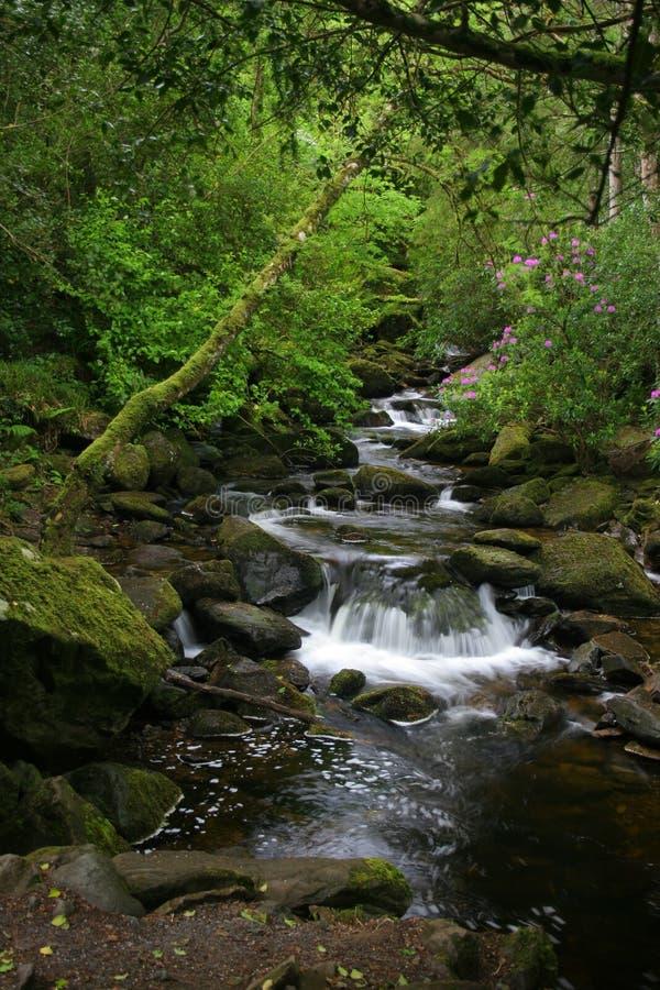 Caída del agua del verde fotos de archivo