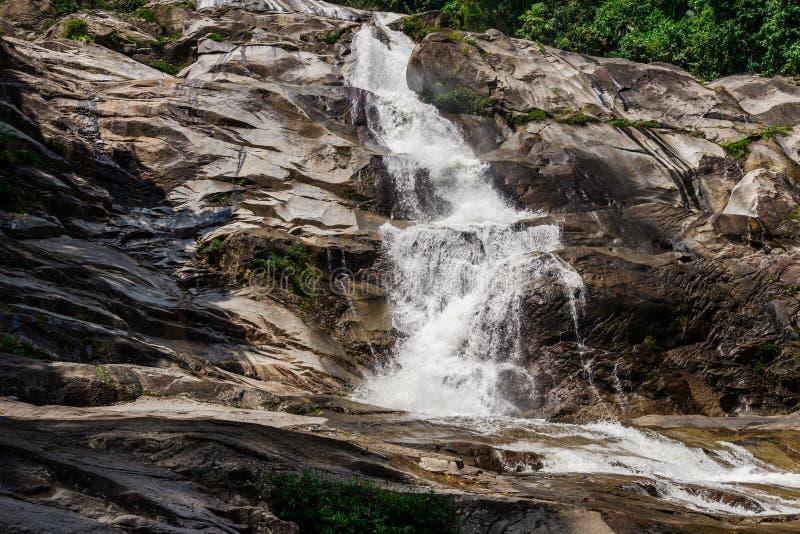 Caída del agua en bosque con la naturaleza verde del árbol imagen de archivo