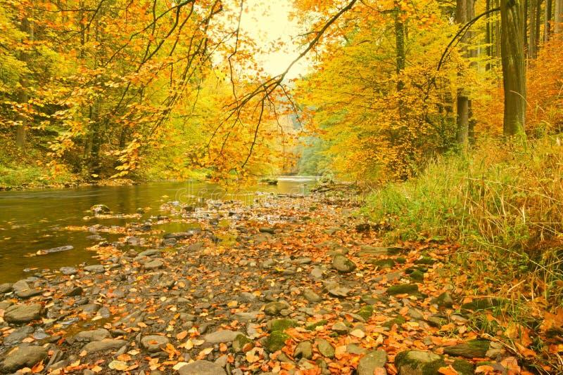 Caída del río fotografía de archivo