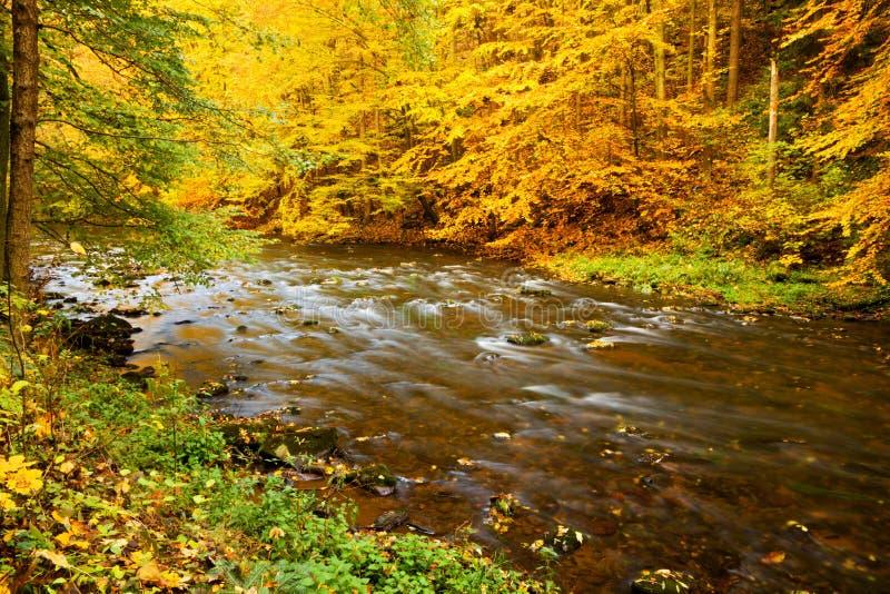 Caída del río fotos de archivo