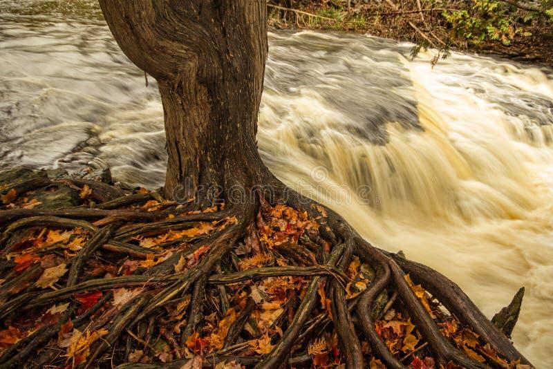 Caída en Jones Falls fotografía de archivo