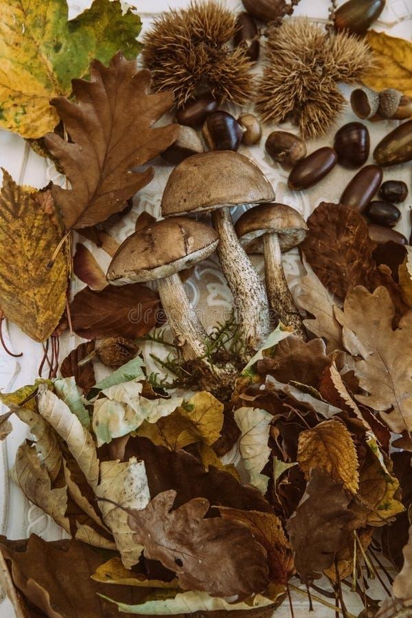 Caída en la tabla con con las frutas del otoño fotos de archivo libres de regalías