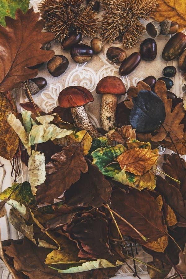Caída en la tabla con con las frutas del otoño imágenes de archivo libres de regalías