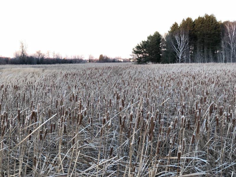 Caída a los ambientes del invierno foto de archivo