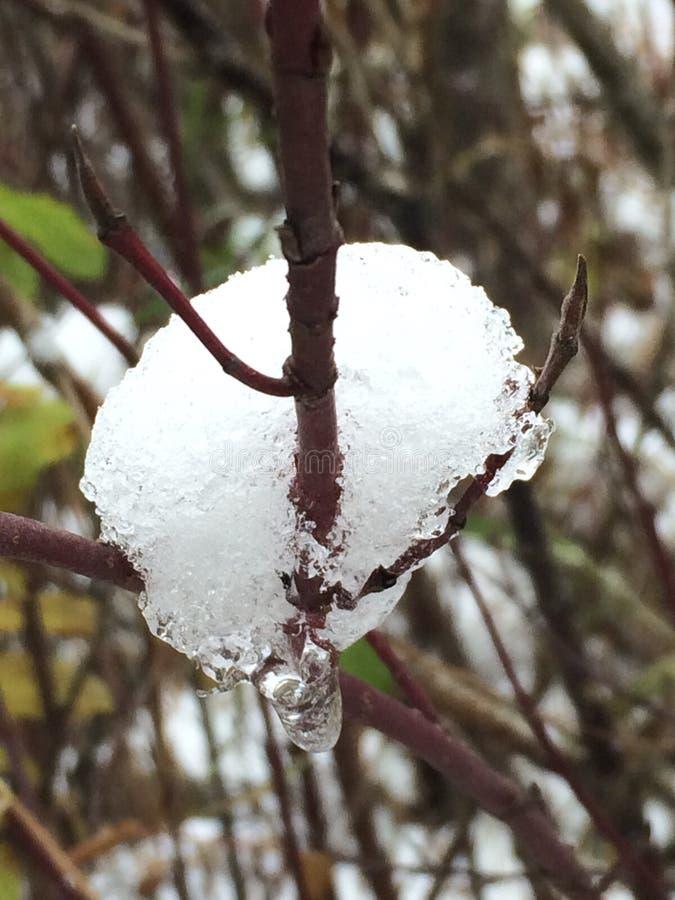 Caída temprana de la nieve fotos de archivo libres de regalías