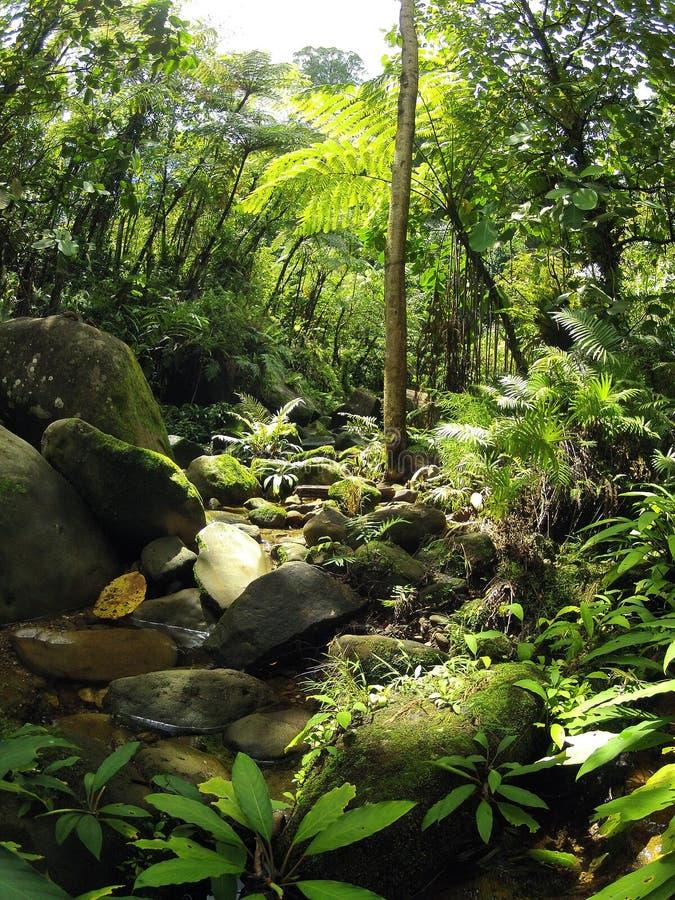 Caída tropical de la corriente de la selva tropical de Borneo fotos de archivo libres de regalías