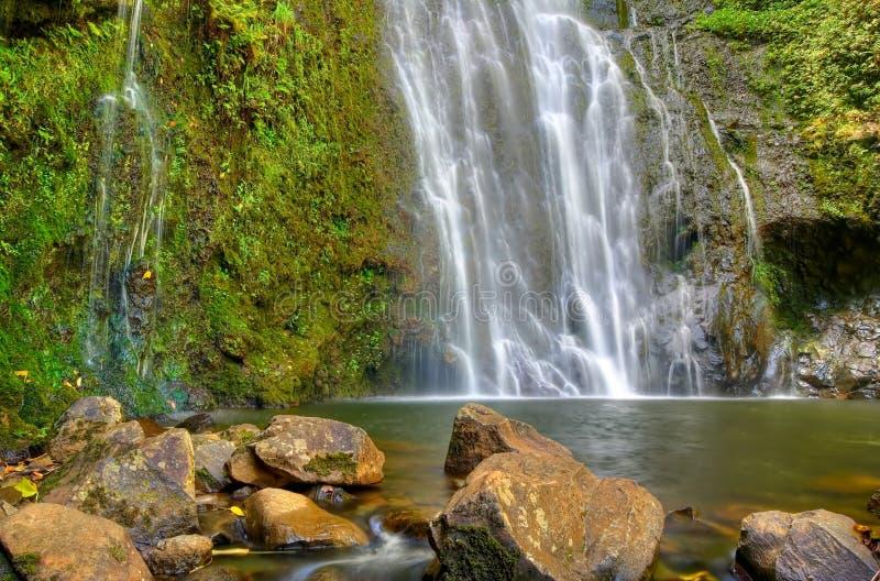 Caída tropical del agua imagen de archivo