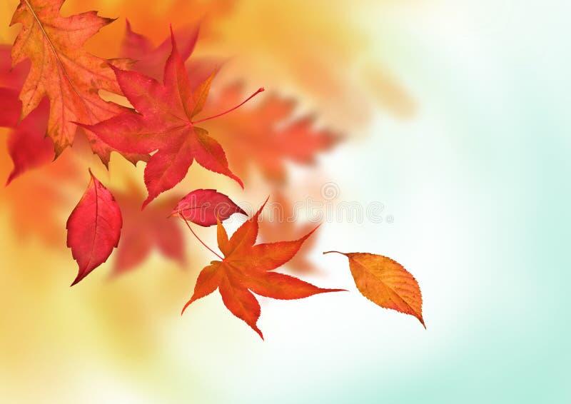 Caídas coloridas del otoño foto de archivo libre de regalías