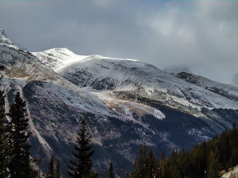 Caídas de la cala del enredo, Jasper National Park, Alberta, Canadá imágenes de archivo libres de regalías
