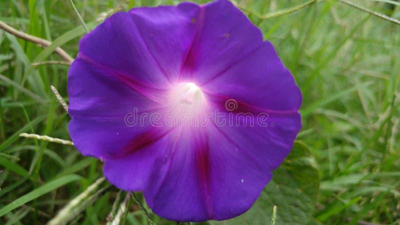 Caídas de las flores fotografía de archivo libre de regalías