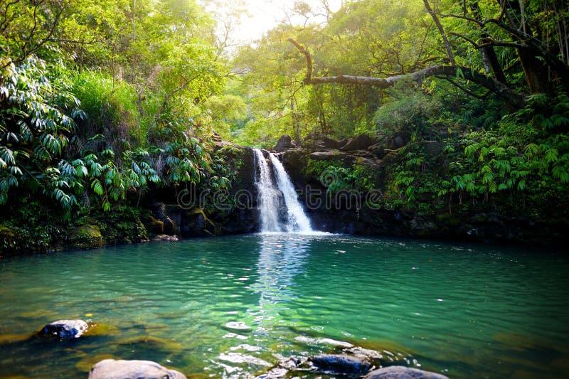 Caídas más bajas de Waikamoi de la cascada tropical y una pequeña charca cristalina, dentro de una selva tropical tropical densa, fotos de archivo