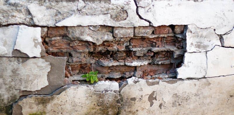 Caído o emplastro de uma parede de tijolo O fundo das paredes emplastradas velhas imagem de stock royalty free