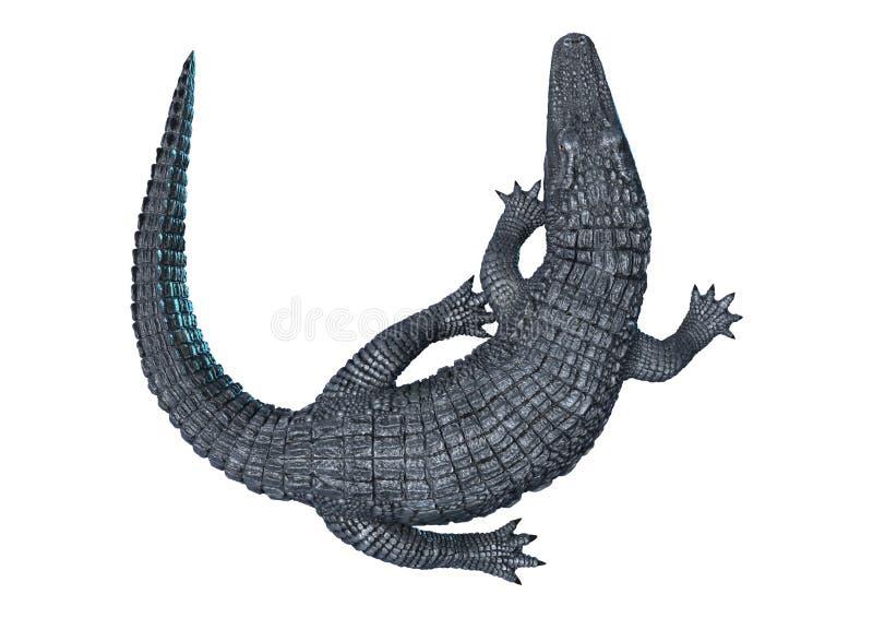 Caïman d'alligator sur le blanc illustration libre de droits