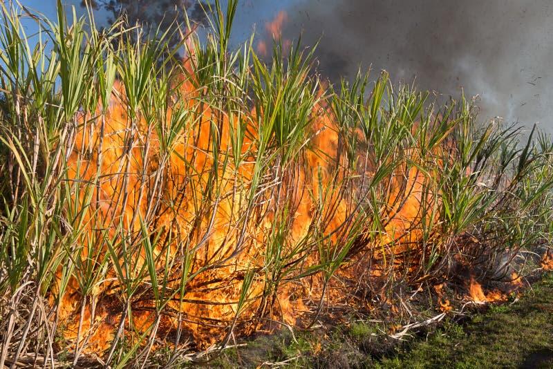 Caña de azúcar ardiendo foto de archivo libre de regalías