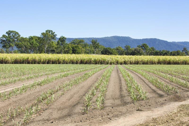 Caña de azúcar en el norte de Queensland imagen de archivo libre de regalías