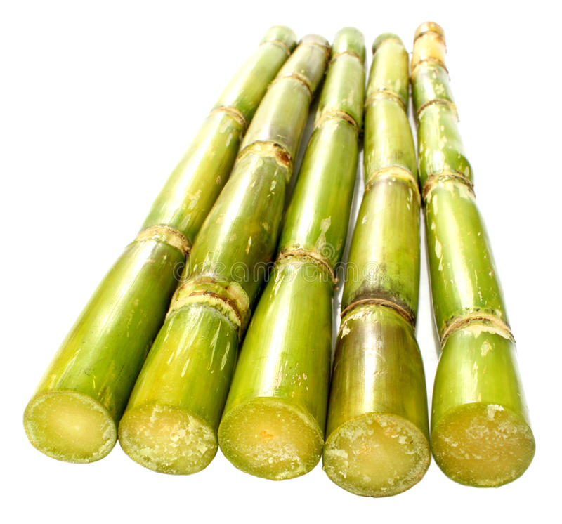 Caña de azúcar verde fresca foto de archivo libre de regalías