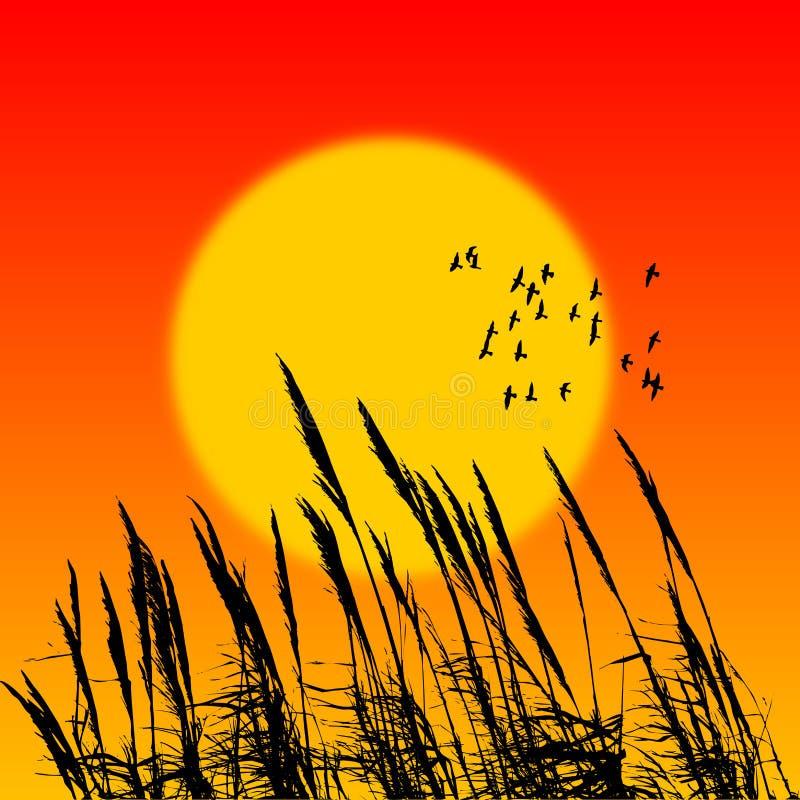 Caña de la puesta del sol stock de ilustración