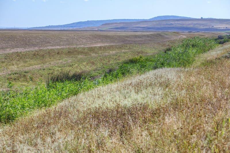 Caña y naturaleza verdes del verano imagen de archivo