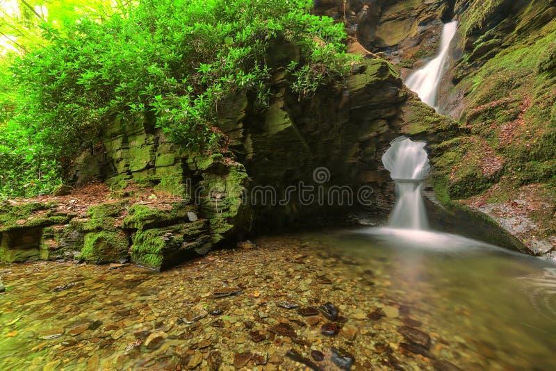 Cañada del St Nectan, Tintagel, Cornualles. imágenes de archivo libres de regalías