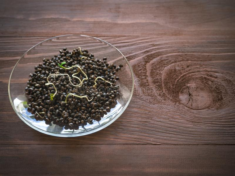 Cañamones de Superfood Granos brotados en fondo marrón de madera imagen de archivo